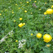 flores de bach aplicaciones
