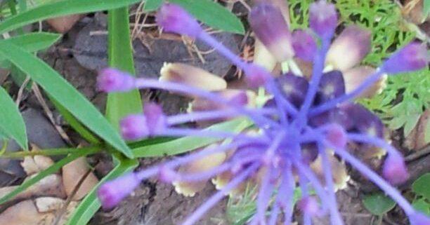 salud natural esencias florales