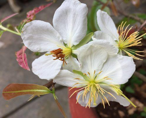 Flores de Bach Valencia, cursos online de esencias florales