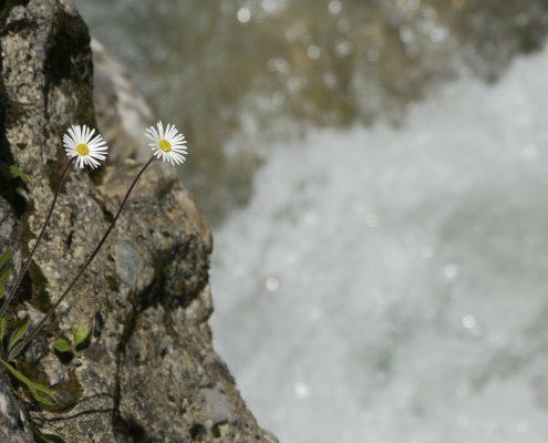 flores de bach en valencia
