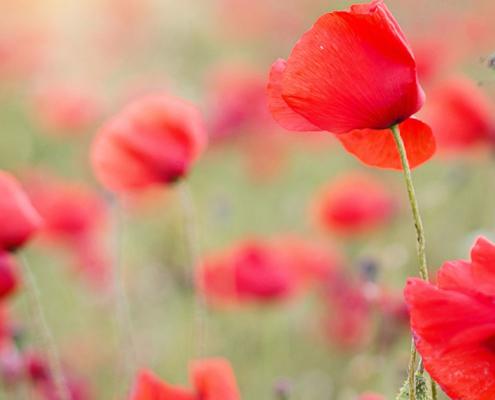 flores de bach propiedades